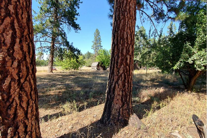 Stunning Oversized Lot amidst Ponderosa Pine