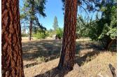 21368537, Stunning Oversized Lot amidst Ponderosa Pine